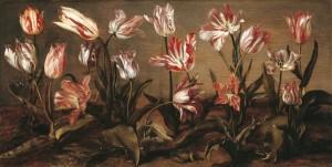tulpen_adriaen-vds-300x151