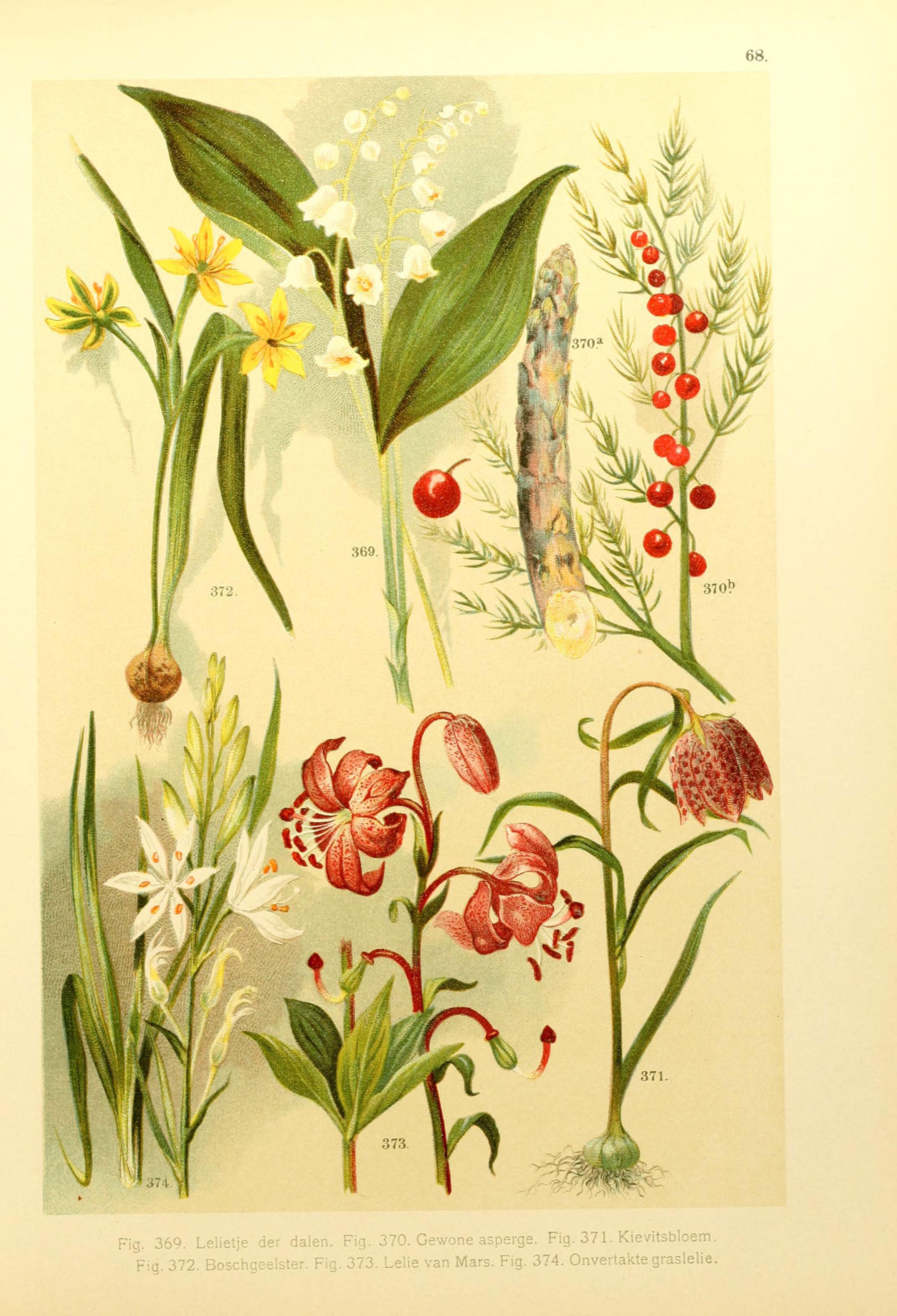 Onze flora Zutphen,W.J. Thieme,1900. http://biodiversitylibrary.org/item/39998
